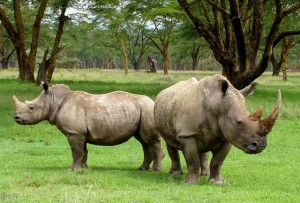 Three Suspected Rhino Poachers Arrested