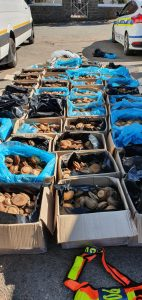 ABALONE WORTH R7 MILLION SEIZED IN THE NORTHERN CAPE